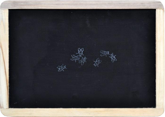 Mustapha Akrim, dessin d'une mouche à la craie sur ardoise