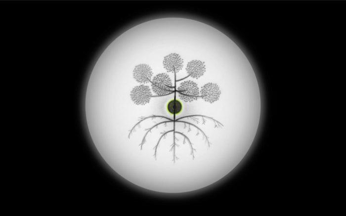 Younès Rahmoun, Habba, vidéo de dessins autour d'une graine