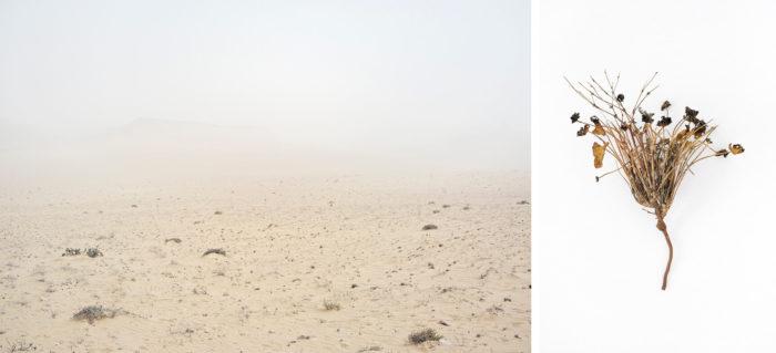 Abdessamad El Montassir, Al Amakine une cartographie des vies invisibles, photographies de paysage et plantes dans le Sahara au sud du Maroc