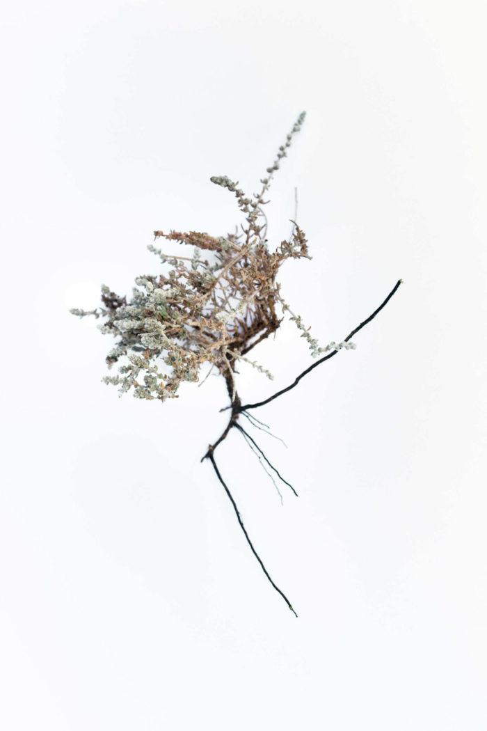 Abdessamad El Montassir, Al Amakine, une photographie des vies invisibles, photographie de plante dans le Sahara au sud du Maroc