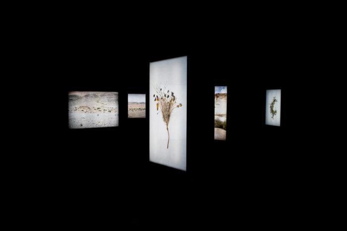 Abdessamad El Montassir, Al Amakine une cartographie des vies invisibles, Vue exposition_Villa Soudan, Rencontres de Bamako. Série de photographies de plantes et de paysages dans des caissons lumineux et pièce sonore