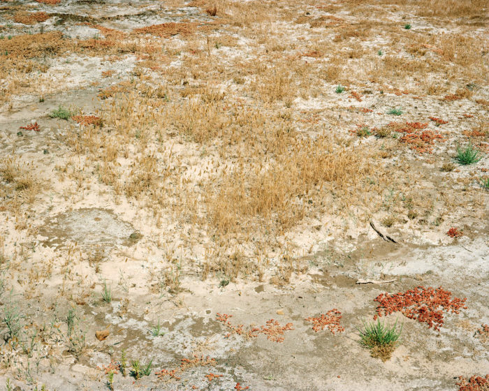 Corinne Silva, Desert Oasis V, Empty Lot, from Badlands 2011. C-type photograph, 127 x 101 cm