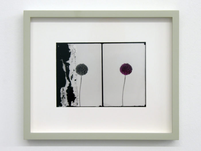 Uriel Orlow, Double Vision (Native Plants), 2013-14. Hand-tinted black and white silver gelatine prints, 24 x 29 cm